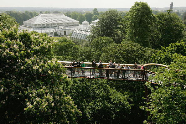 Kew Gardens「Kew Gardens Launches Its New Treetop Walkway」:写真・画像(4)[壁紙.com]