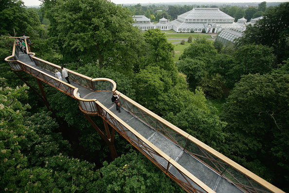 Kew Gardens「Kew Gardens Launches Its New Treetop Walkway」:写真・画像(5)[壁紙.com]