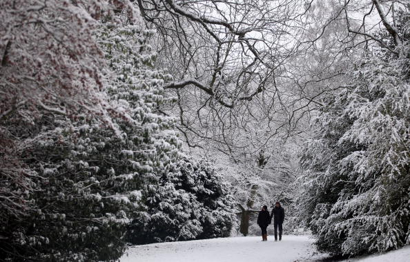 Botanical Garden「Cold Spell Brings Snow To the United Kingdom」:写真・画像(14)[壁紙.com]