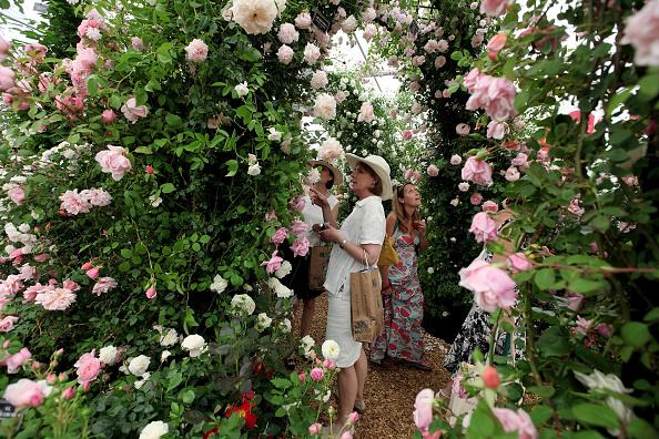 Rose - Flower「2010 Chelsea Flower Show Is Opened To The Public」:写真・画像(16)[壁紙.com]