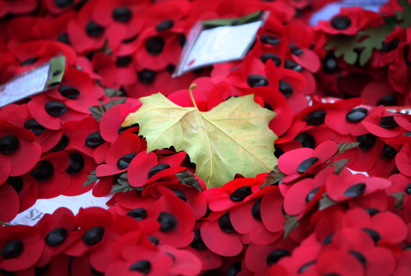 Poppy - Plant「Armistice Day Services Are Held Throughout The Country」:写真・画像(2)[壁紙.com]