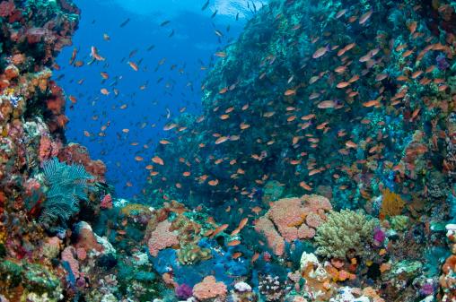 熱帯魚「Reef scene with corals and fish, Komodo, Indonesia.」:スマホ壁紙(6)