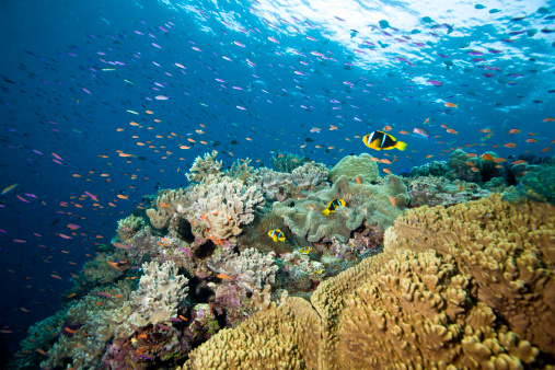 熱帯魚「Reef Scene」:スマホ壁紙(14)