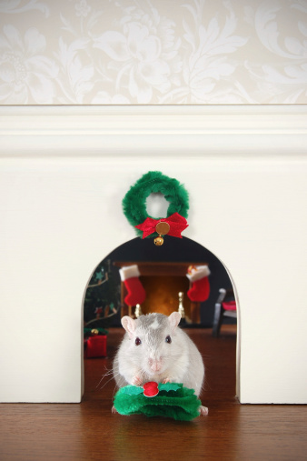 Gerbil「Decorating the Mouse Hole for Christmas」:スマホ壁紙(9)