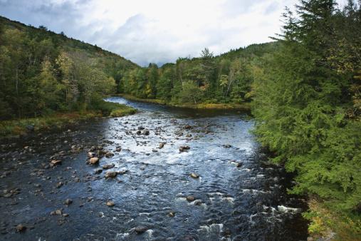Adirondack Mountains「River and forest, Adirondacks, New York」:スマホ壁紙(9)