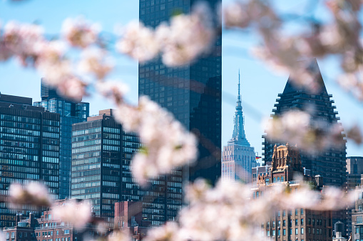 flower「Empire State Building and the other skyscrapers can be seen behind Cherry blossoms from Roosevelt Island New York on 2017.」:スマホ壁紙(12)