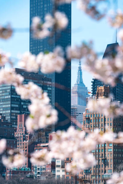 Empire State Building and the other skyscrapers can be seen behind Cherry blossoms from Roosevelt Island New York on 2017.:スマホ壁紙(壁紙.com)