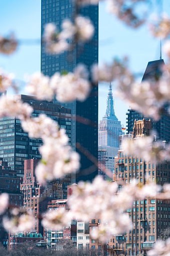 Vertical「Empire State Building and the other skyscrapers can be seen behind Cherry blossoms from Roosevelt Island New York on 2017.」:スマホ壁紙(13)