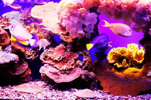 Soft Coral「Aquarium fish.」:スマホ壁紙(10)