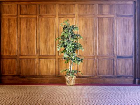 Wood Paneling「Indoor pot plant against wood paneling」:スマホ壁紙(3)