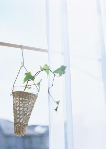 Sunny「A foliage plant」:スマホ壁紙(17)