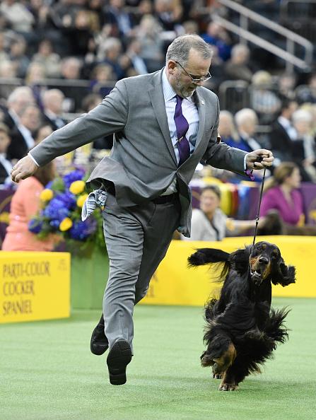 ミッドタウンマンハッタン「Westminster Kennel Club Hosts Its Annual Dog Show In New York」:写真・画像(0)[壁紙.com]