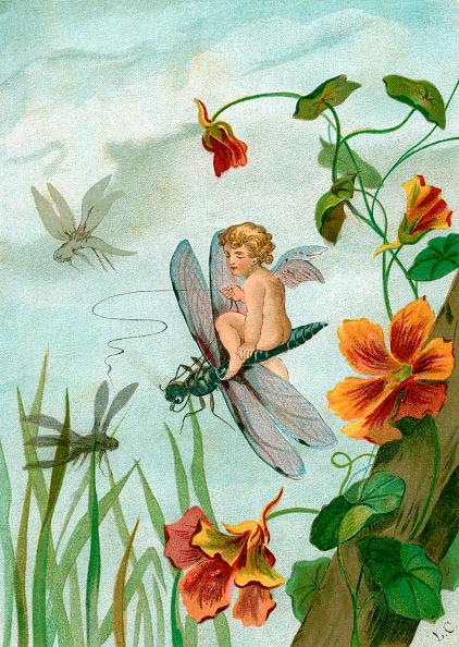 Fairy「Fairy Riding A Dragonfly」:写真・画像(2)[壁紙.com]