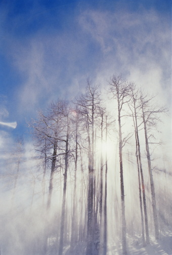 Aspen Tree「Snow blowing around aspen trees (Populus sp.), low angle view」:スマホ壁紙(14)
