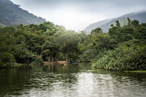 Amazon Rainforest「Mata Atlantica - Atlantic Forest in Brazil」:スマホ壁紙(4)