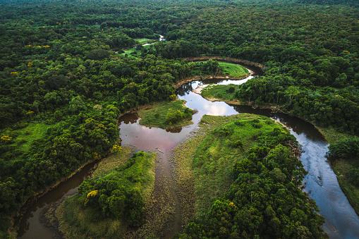 Amazon Rainforest「Mata Atlantica - Atlantic Forest in Brazil」:スマホ壁紙(5)