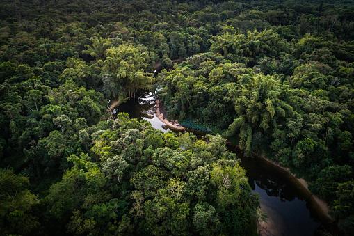 Amazon River「Mata Atlantica - Atlantic Forest in Brazil」:スマホ壁紙(19)