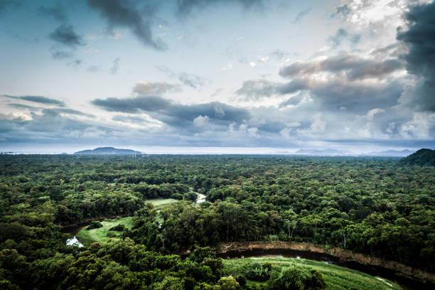 Mata Atlantica - Atlantic Forest in Brazil:スマホ壁紙(壁紙.com)