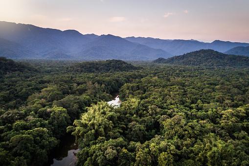 Sustainable Lifestyle「Mata Atlantica - Atlantic Forest in Brazil」:スマホ壁紙(14)