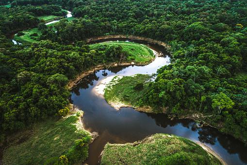 Amazon Rainforest「Mata Atlantica - Atlantic Forest in Brazil」:スマホ壁紙(7)