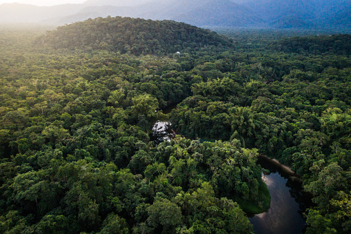Amazon River「Mata Atlantica - Atlantic Forest in Brazil」:スマホ壁紙(6)