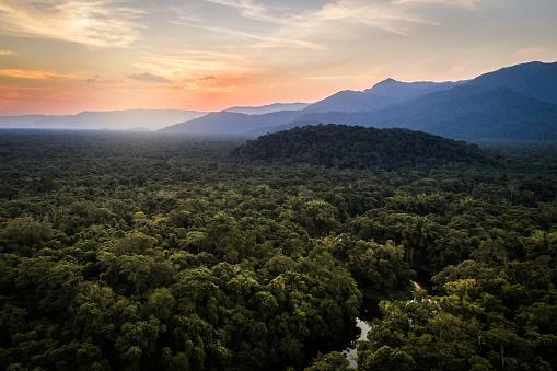 Amazon River「Mata Atlantica - Atlantic Forest in Brazil」:スマホ壁紙(2)