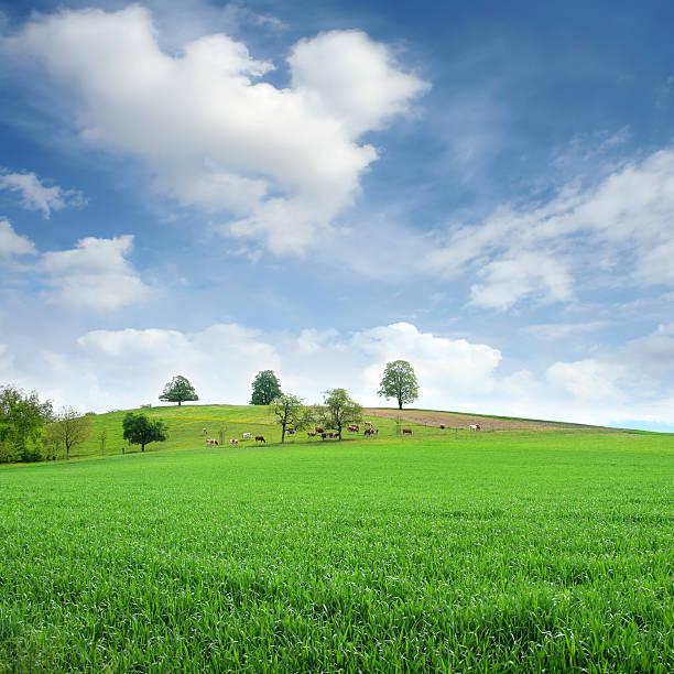 countryside:スマホ壁紙(壁紙.com)
