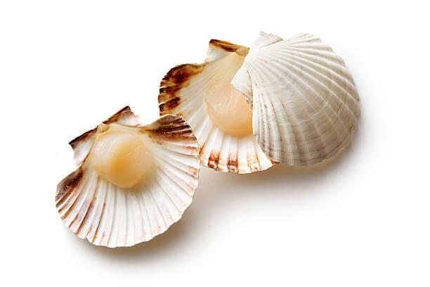 Seafood: Scallops:スマホ壁紙(壁紙.com)
