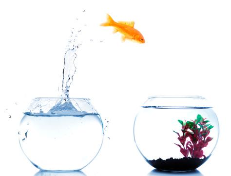 金魚「金魚の出発を新しい fishtank」:スマホ壁紙(17)