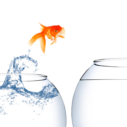Goldfish「金魚並みのジャンプの水」:スマホ壁紙(12)