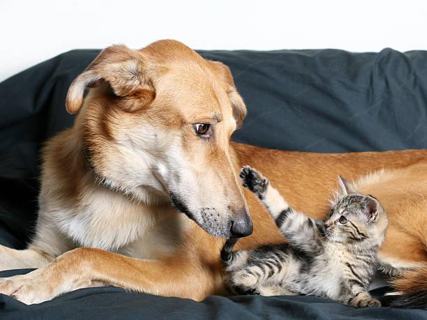 Dog and Kitten:スマホ壁紙(壁紙.com)