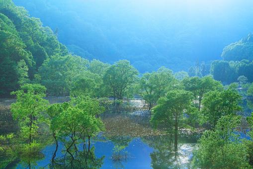 Fog「Lake Hosen and Trees」:スマホ壁紙(12)