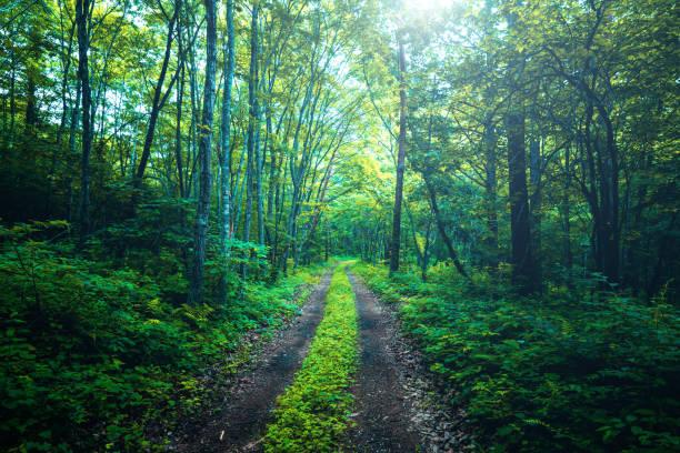 Hiking trail in the forest:スマホ壁紙(壁紙.com)