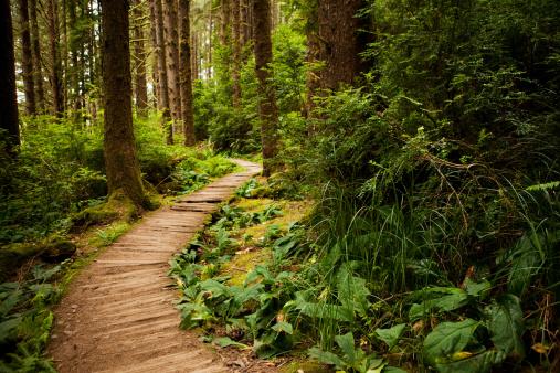 Sequoia Tree「Hiking trail through the redwoods」:スマホ壁紙(18)