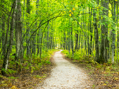 Great Lakes「Hiking Trail in early Autumn Forest」:スマホ壁紙(2)