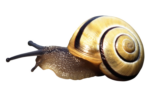 snails「Snail against white background, close-up」:スマホ壁紙(12)