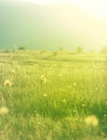 パステル「鮮やかな夏の草地」:スマホ壁紙(16)