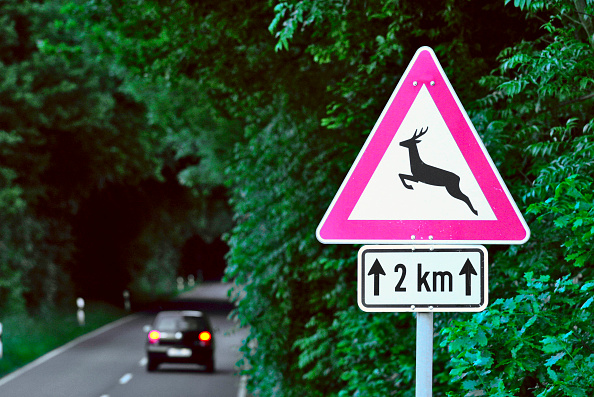Focus On Foreground「Road sign in Germany warning wild animals could cross the road.」:写真・画像(10)[壁紙.com]