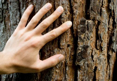 Hand「Hand on bark.」:スマホ壁紙(6)
