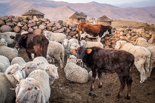 Lesotho「Livestock pen」:スマホ壁紙(12)