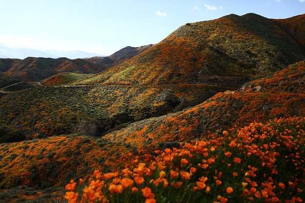 Bestof「Wet Winter Weather Brings 'Super Bloom' Of Wildflowers To California」:写真・画像(0)[壁紙.com]