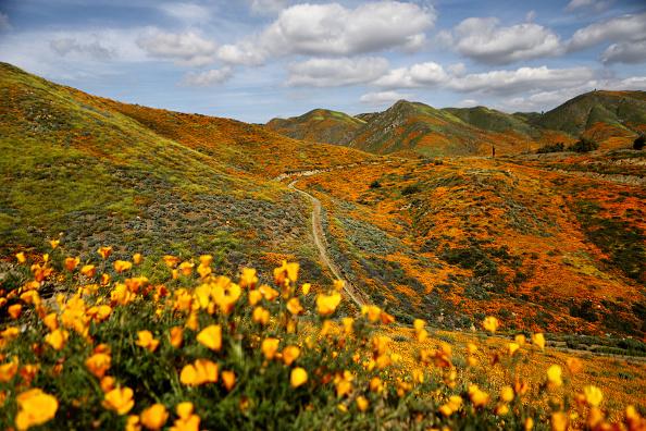 横位置「Super Bloom Of Spring Flowers To Decline Soon In California's Lake Elsinore」:写真・画像(17)[壁紙.com]