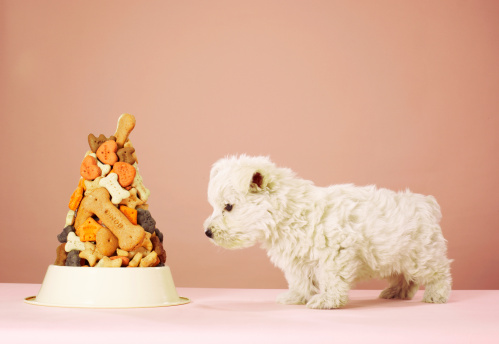 Mammal「Puppy looking at pile of biscuits in dog bowl」:スマホ壁紙(8)