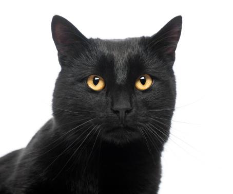 黒猫「Close-up of a Black Cat」:スマホ壁紙(15)