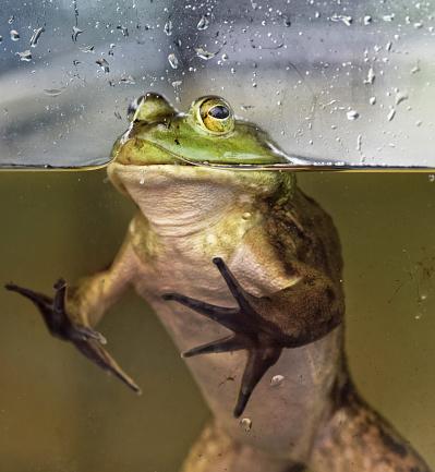 Three Quarter Length「Close-up of a green frog in an aquarium」:スマホ壁紙(9)