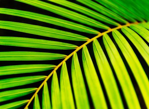 Palm tree「Close-up of palm leaf on black background」:スマホ壁紙(14)
