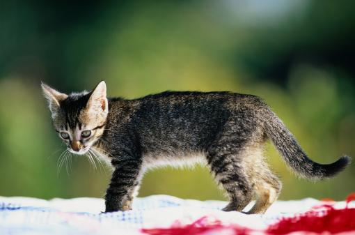 子猫「Close-Up of a Kitten」:スマホ壁紙(1)