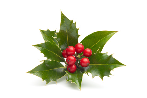 Holly「Close-up of vividly colored holly isolated in white」:スマホ壁紙(4)