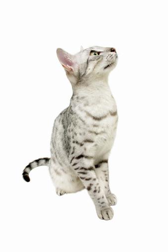 猫「Close-up of a cat」:スマホ壁紙(2)