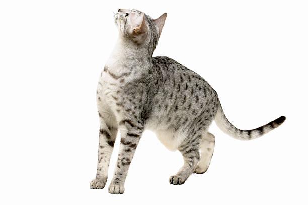 Close-up of a cat:スマホ壁紙(壁紙.com)